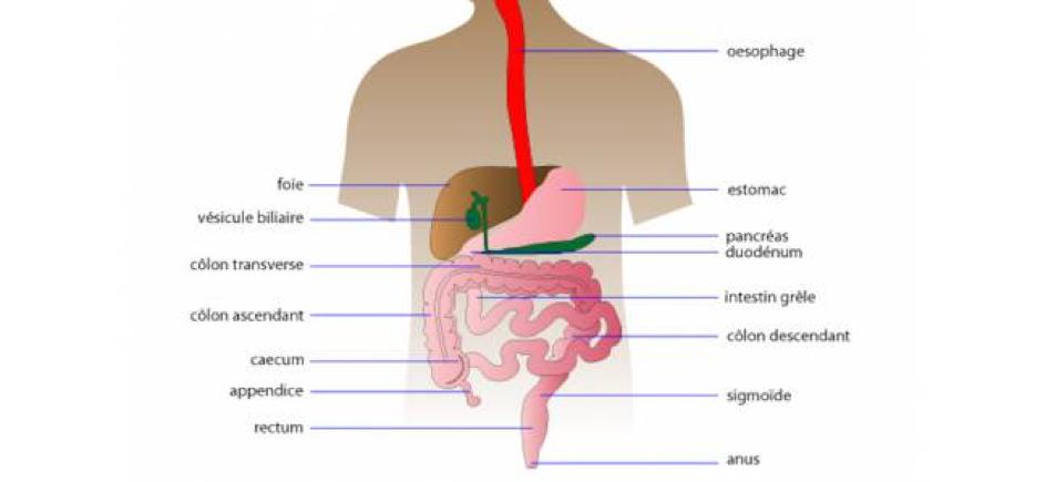 MICI-Santé-FHPMCO-Maladie-Maladie chronique-Intestins-Crohn-Maladie de crohn
